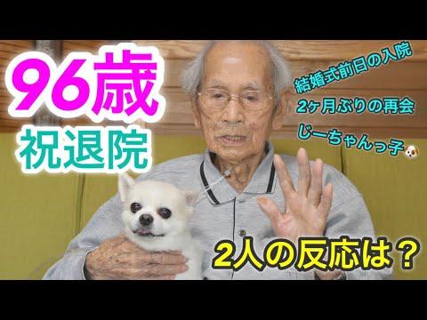 感動の再会🥺長期入院していた大好きなじーちゃんを大喜びで迎える犬チワワのくーちゃん🐶