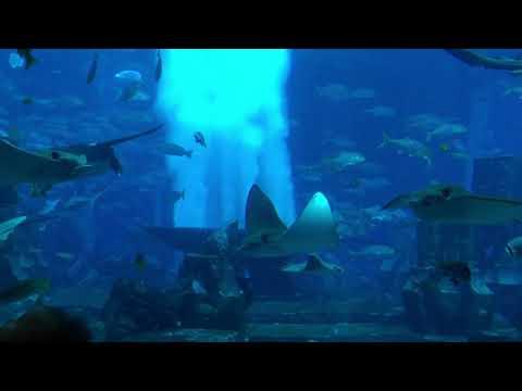 The Lost Chambers Aquarium Dubai