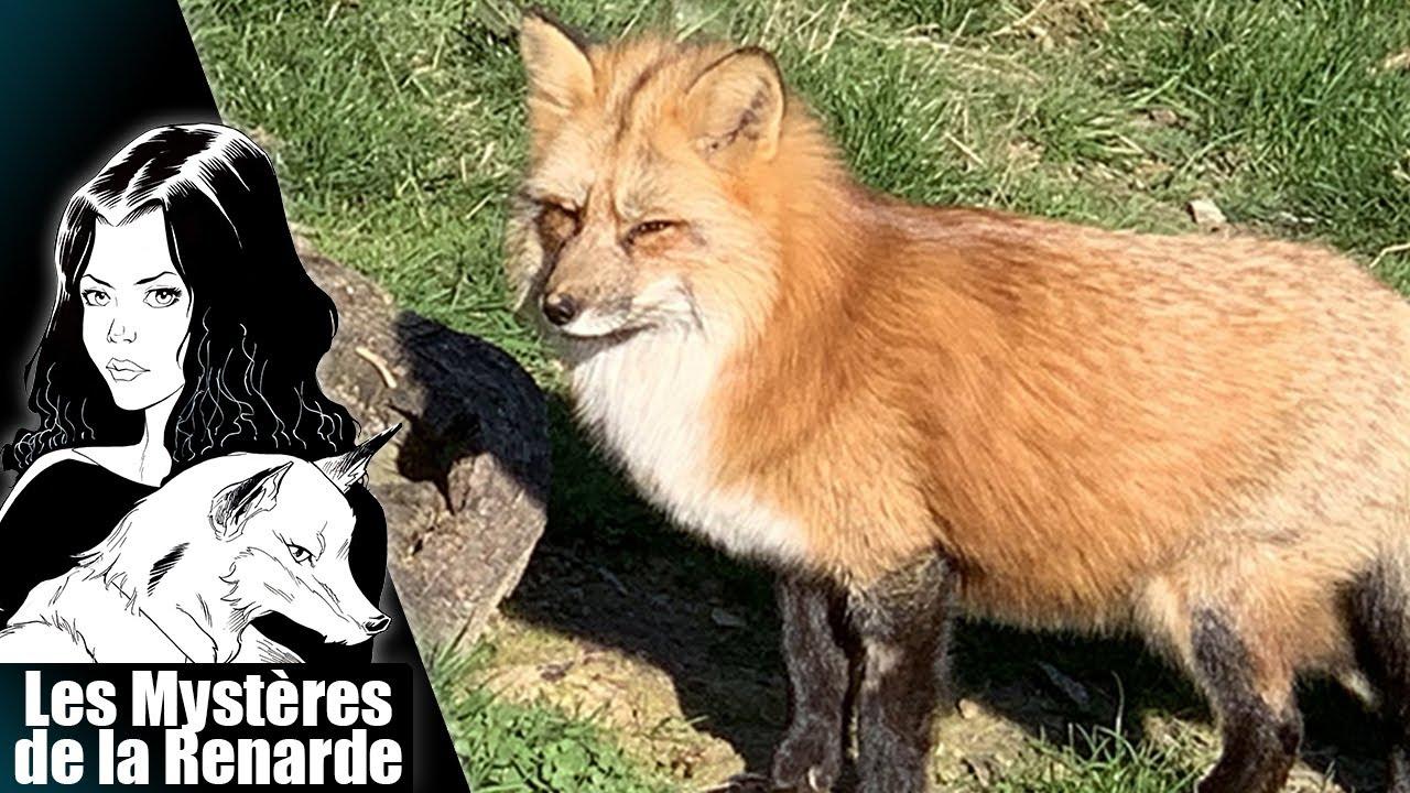 Le Renard ~ Le Bestiaire Fantastique de la Renarde ~ Les Mystères de la Renarde