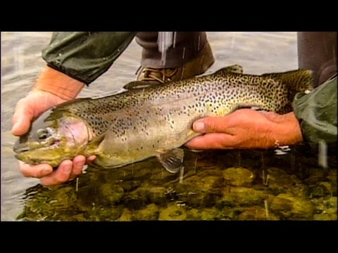Fishing the best Trout River in the world