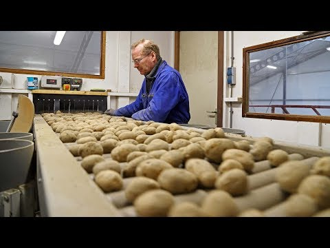 The Seed Potato Story | What Goes On Behind Closed Doors | VHM Machinery