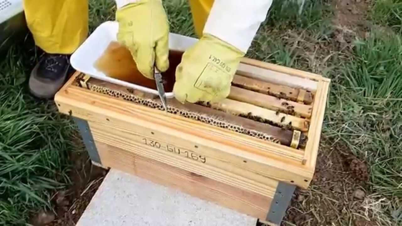 Creación de núcleo de abejas - YouTube