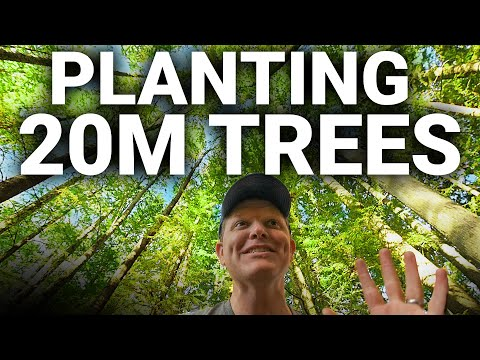 How to Plant 20 MILLION TREES - Smarter Every Day 227 #TeamTrees