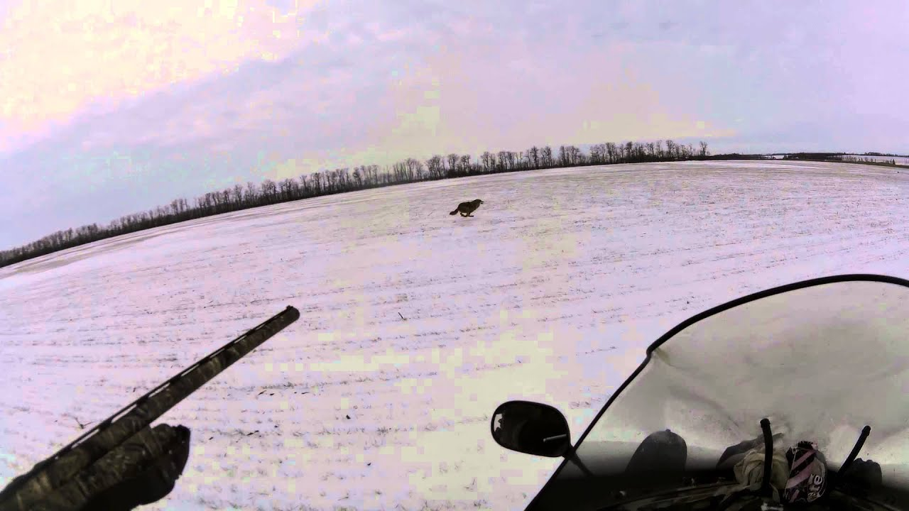 Сани для снегохода plastent - YouTube
