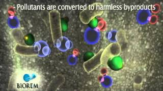 BIOREM - How A Biofilter Works.avi