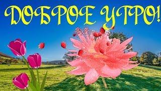 Доброе утро-зажигательная музыкальная видео открытка с добрым утром, хорошим днем, СУПЕРПОЗИТИВ!