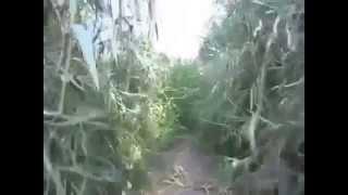 Bones - Graffta 7 / Humos de rancho con Kaz