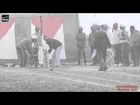 PANWAN (Dasuya) Greyhaound Races - 2014    HD   