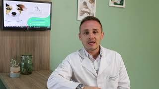 Video case | Pancreatite em animais | Produzido pela MADÍ Comunicação para divulgação em rede social