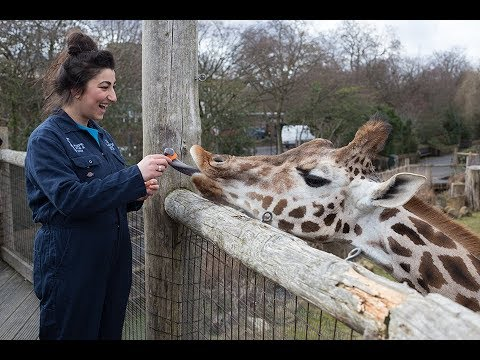 Keeper for a Day Experience at ZSL London Zoo