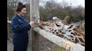 Keeper for a Day Experience at ZSL London Zoo thumbnail