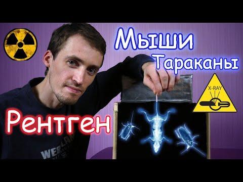 Просветил Мышей и Тараканов Самодельным Рентгеном!