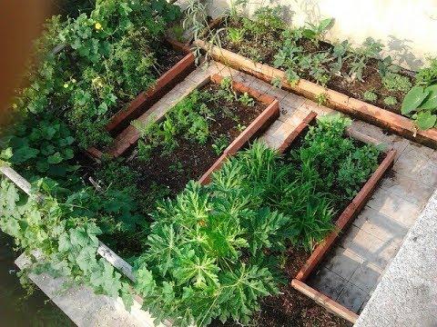 Importance Of Terrace Garden