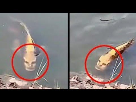 Чудо-Рыбу с Человеческим Лицом Засняли в Китае!