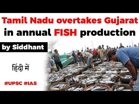 Tamil Nadu Takes Over Gujarat In Annual Fish Production, Annual Marine Fish Landing Report By CMFRI