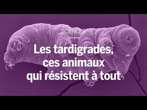 Les tardigrades, ces animaux qui résistent à tout