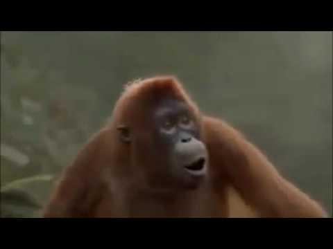 Affe tanzt: Hoch die Hände Wochenende