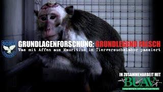 Was mit Affen aus Mauritius im Tierversuchslabor passiert... // SOKO TIERSCHUTZ e.V.