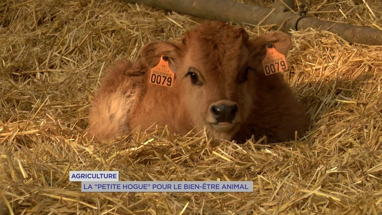 Yvelines | Agriculteurs : La petite Hogue pour le bien être animal