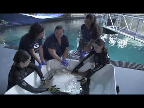 STEAM Forward Ep. 3: Veterinary Operations at Georgia Aquarium (Activity Breaks)