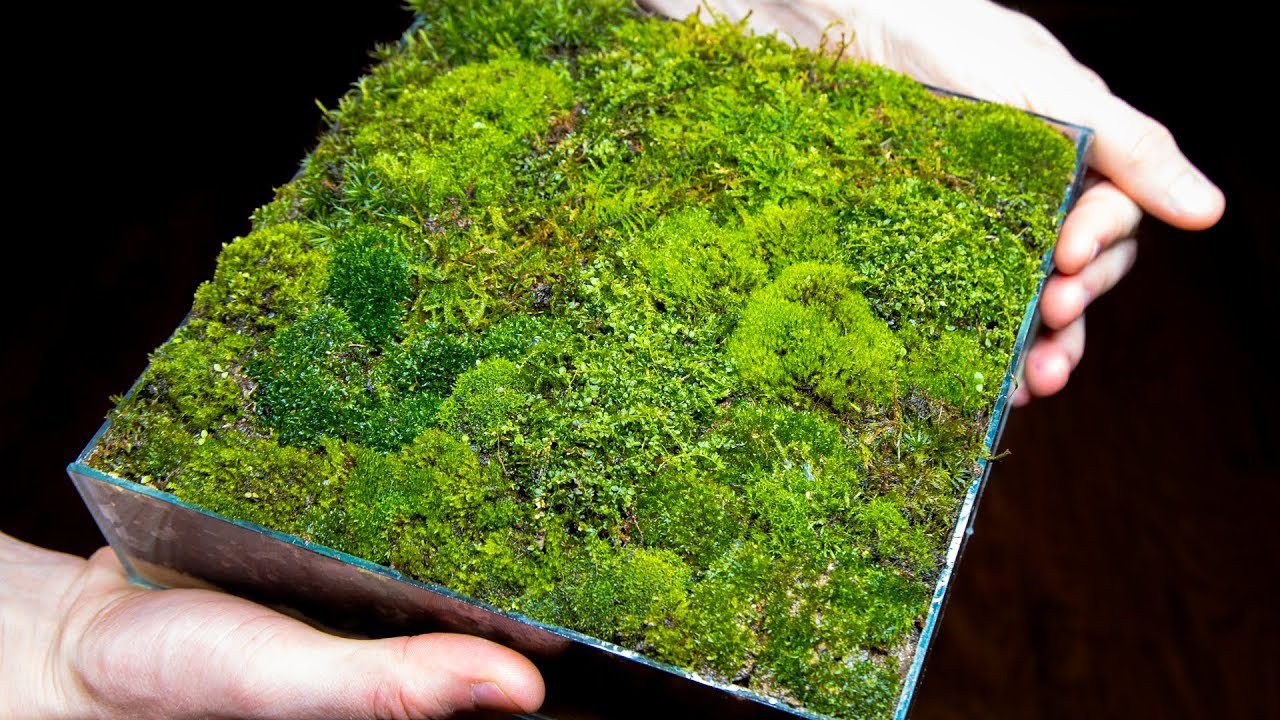 Making A Moss Garden From Scratch Satisfying Relaxing Youtube
