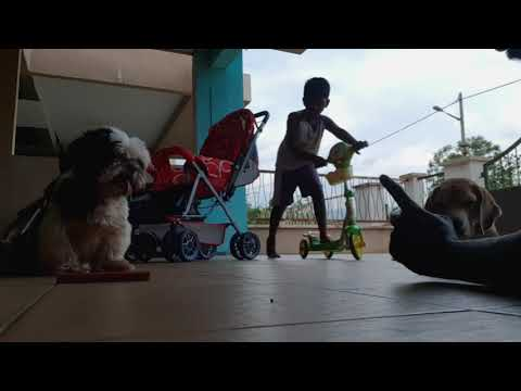 Dogs Food Stay Intentionally With Peppy Song Tired Dog