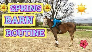 SPRING BARN ROUTINE! | bareback riding and more!