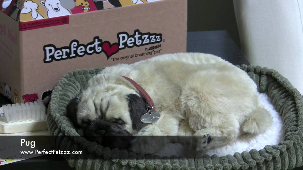 wow how to get perky pug