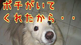愛犬を亡くした女性からの書き込みがありました。その愛犬は、免疫系の...