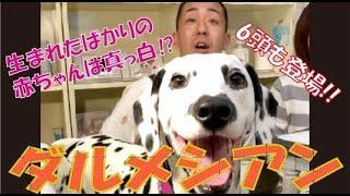 番組提供:ペットライン株式会社 http://www.petline.co.jp/ 赤ちゃん出...