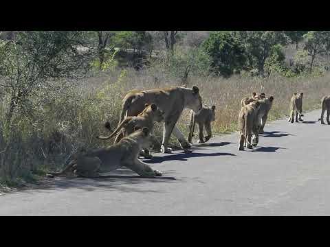 Kruger National Park Nov 19