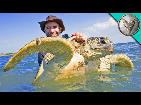 Catching Sea Turtles!