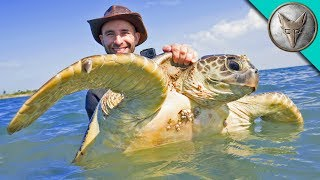 catching-sea-turtles