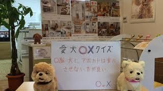 愛犬家住宅ならセラフ榎本〇ホームページはこちらhttp://www.qp-dog.jp ...