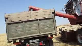 Azərbaycanda taxıl bicini