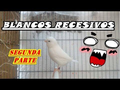 CONOZCAMOS MEJOR A LOS BLANCOS RECESIVOS!! 😱😱(segunda parte) (mejora audio)
