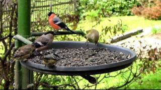 Ptáci Na Krmítku Birds Feeding On Bird Table