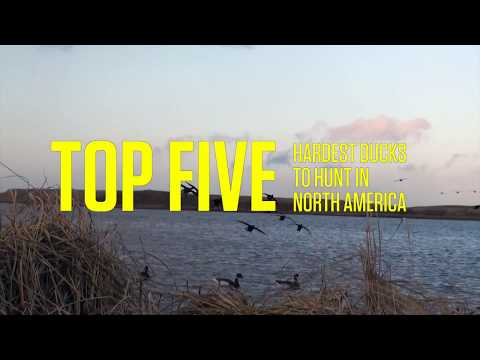 The Top Five Hardest Ducks To Hunt In North America
