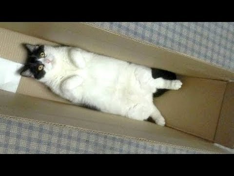 Warning: Youll get STOMACH ACHE FROM LAUGHING SO HARD   Humorous CAT compilation