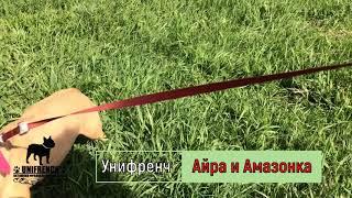 Питомник Унифренч, Французский бульдог Айра и Амазонка на прогулке