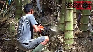 Gegaji Mesin untuk Menebang Bambu Petung