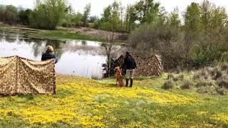 Junior Hunt Test  Water series 2018
