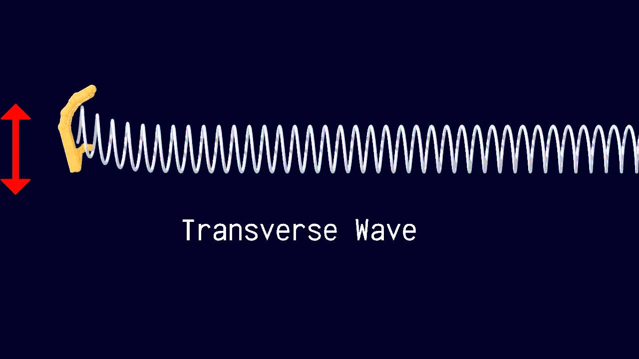 Longitudinal And Transverse Waves Youtube