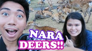 Playing with the deers | Lifewithabbyandrj