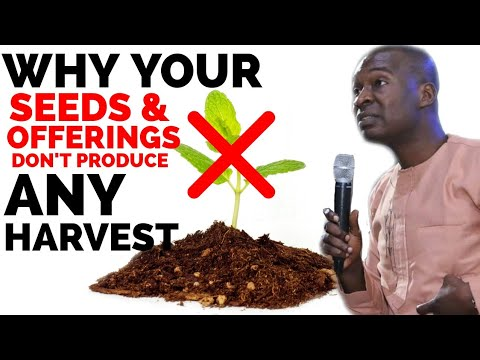 Download THIS IS THE REASON WHY YOUR SEEDS AND OFFERINGS DON'T PRODUCE HARVESTS   APOSTLE JOSHUA SELMAN