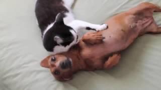 Dog and activity / Hund und Aktivität / Собака и активность 'Massive Green'