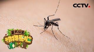 [正大综艺·动物来啦]选择题:蚊子是通过哪个部位找到吸血对象?| CCTV