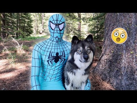 Blue Spiderman And Kakoa's Camping Adventure!