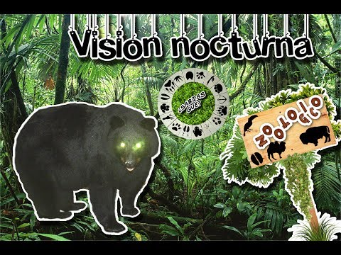 Night vision | As nocturnal animals watch | (Virtual Zoology) | Did You Know?