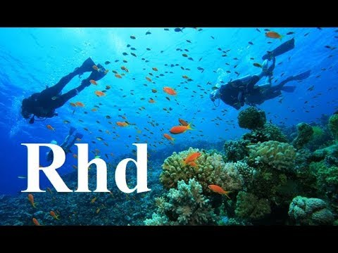 Carnivores of the Coral Garden  Nature Sea,  2018 HD Documentary.